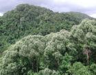 Самые лесистые страны мира