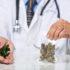 5 стран с самыми высокими расходами на марихуану