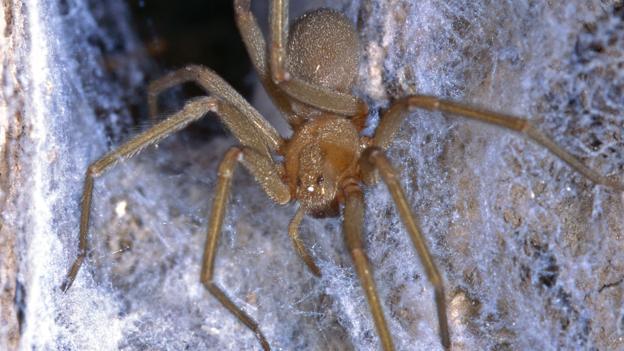Музей с ядовитыми пауками
