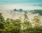 Роль развитых и развивающихся стран в сохранении леса