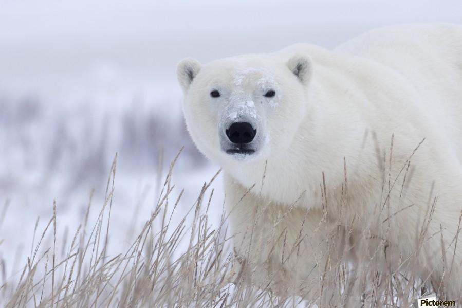 Арктика экология