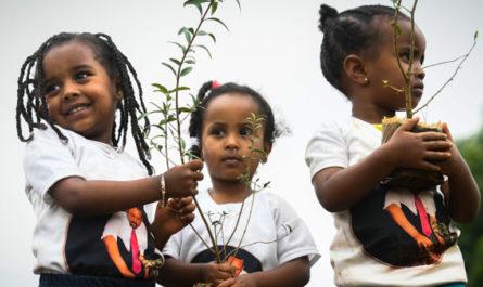 Почему восстановление природы так важно для предотвращения изменения климата