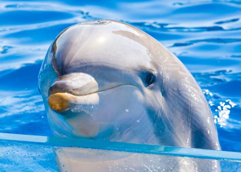 5 стран с самым большим количеством невольных дельфинов