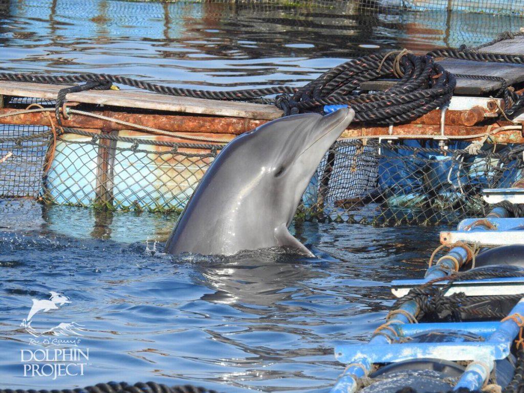 Депрессии дельфинов