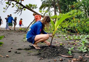 Сохранение и восстановление природы может стать мощным инструментом смягчения последствий изменения климата и адаптации к ним