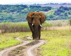 5 лучших мест для посещения в Руанде
