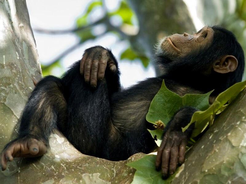 Национальный парк Nyungwe