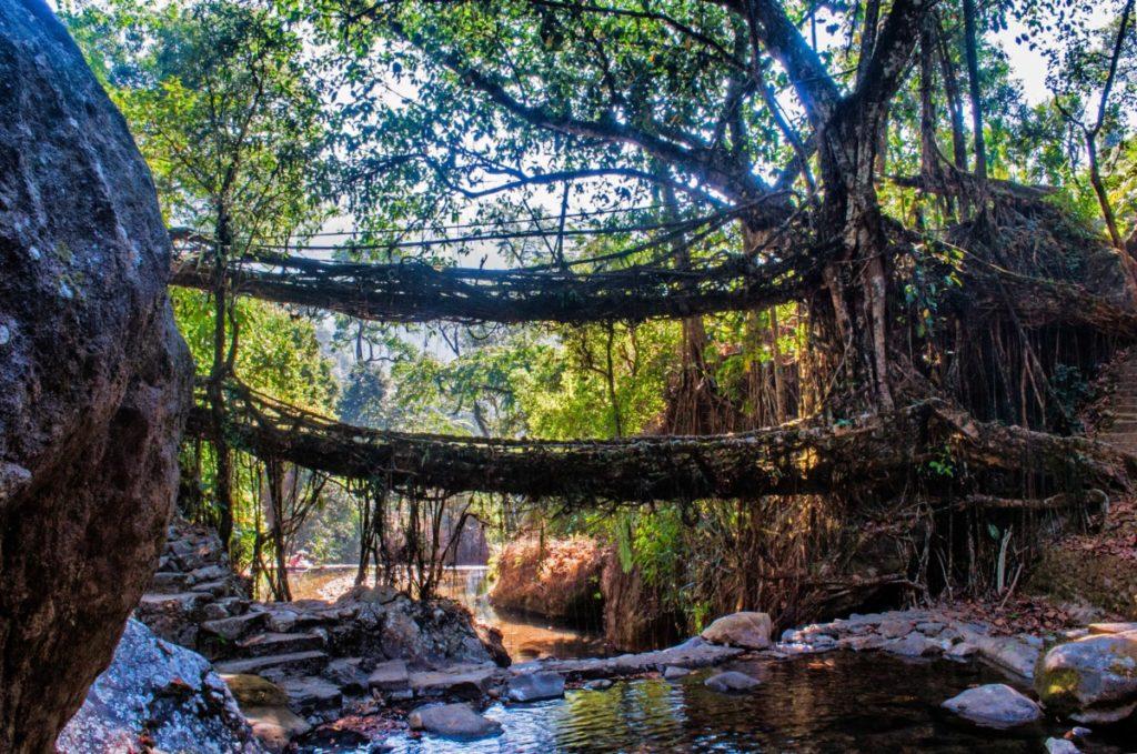 Живые корневые мосты - Черапунджи
