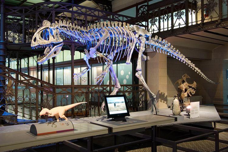 Музей естественных наук, Брюссель