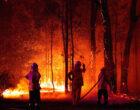 8 фактов, которые все должны знать о пожарах в Австралии