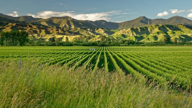 Мальборо Новая Зеландия