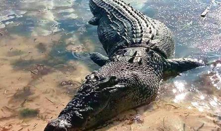 Топ-10 самых опасных животных Австралии
