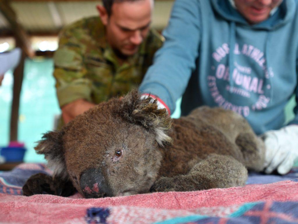 Миллионы растений и животных Австралии находятся в опасности