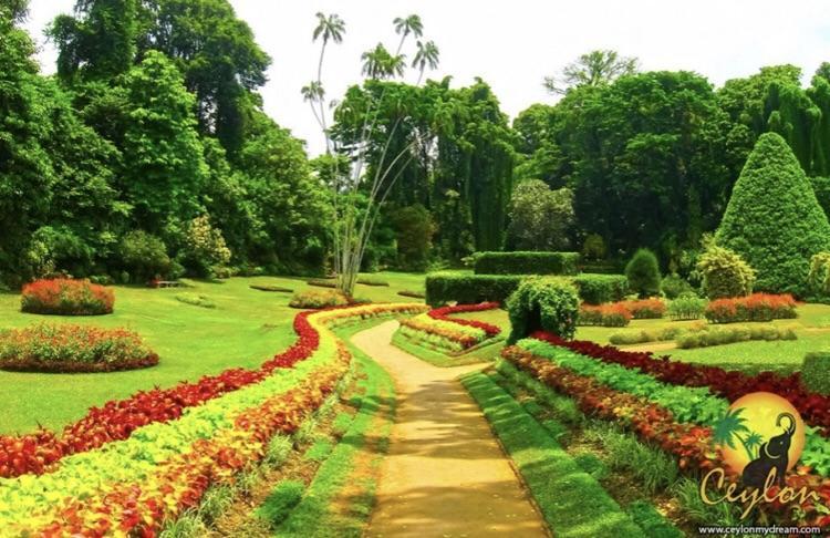 Австралия Королевский парк и ботанический сад