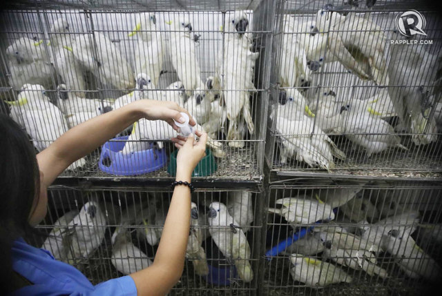 Филиппины торговля дикими животными