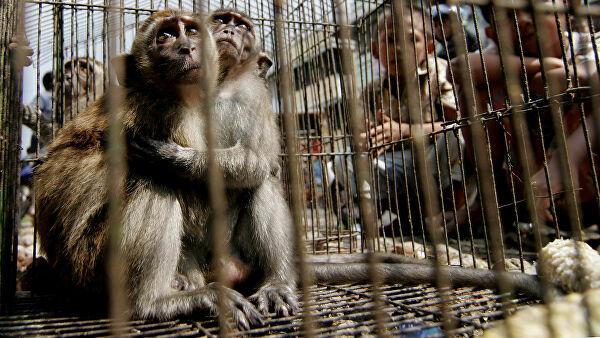 Таиланд торговля дикими животными