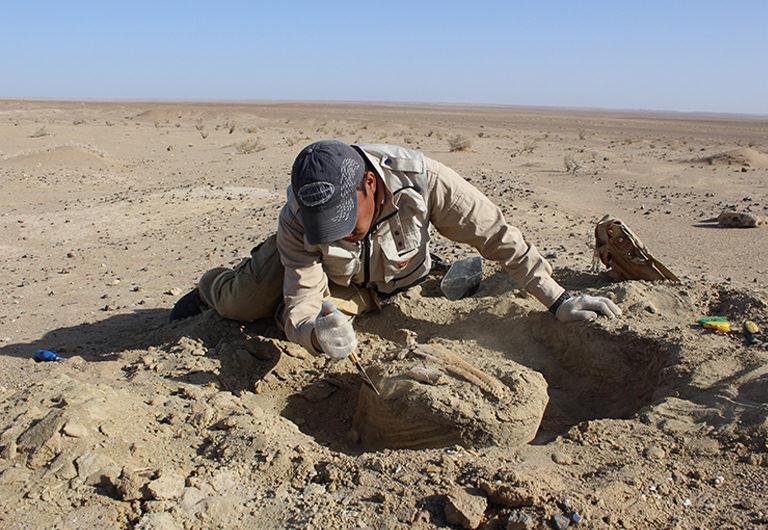 ТОП-6 мест в мире, где можно найти кости динозавров