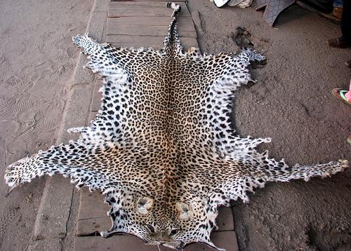 Индия торговля дикими животными