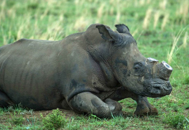 10 стран, где незаконная торговля дикими животными очень активна