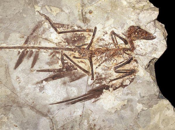 Западный Ляонин динозавры