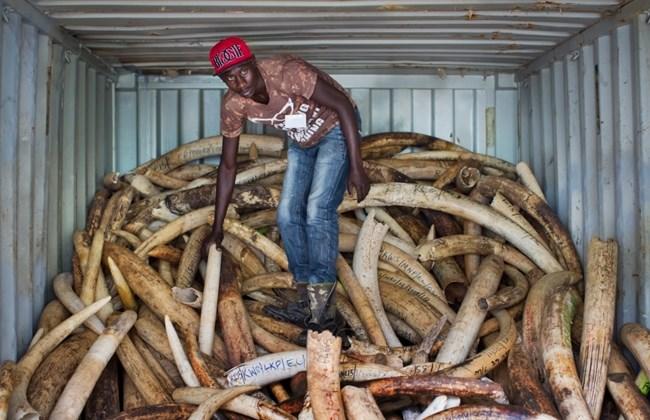 Кения торговля дикими животными