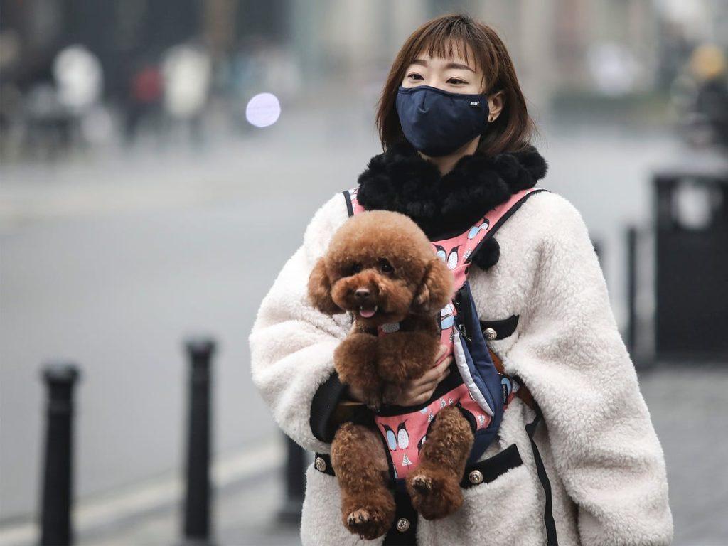 Могут ли люди получить новый коронавирус от кошек и собак