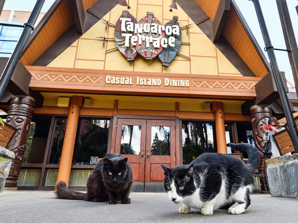 Диснейленд наводнен кошками