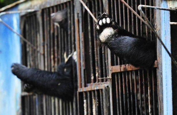 Вьетнам торговля дикими животными