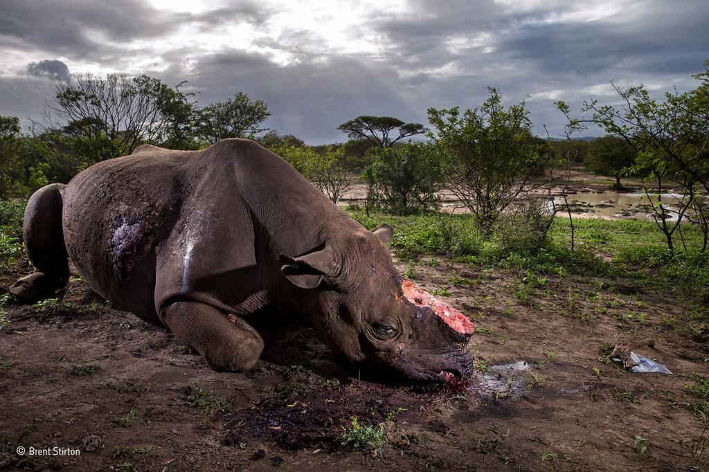 Южная Африка торговля дикими животными