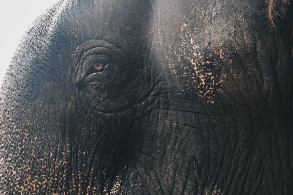 Танзания торговля дикими животными