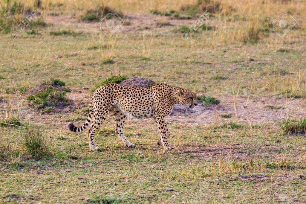 Национальный парк Масаи Мара, Кения