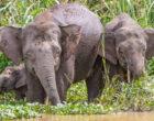 Национальные парки, где можно увидеть слонов в дикой природе