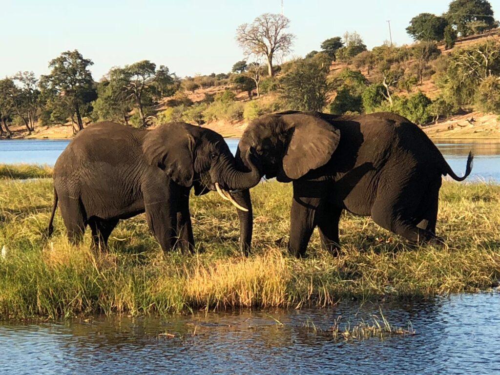 Национальный парк Чобе, Ботсвана
