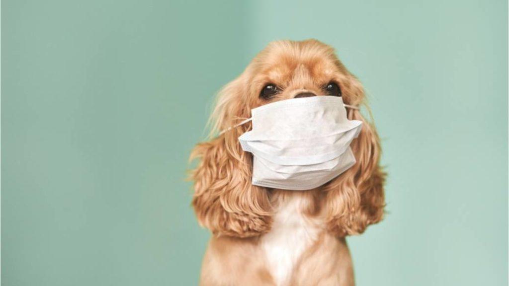 Домашние животные могут распространять новый коронавирус