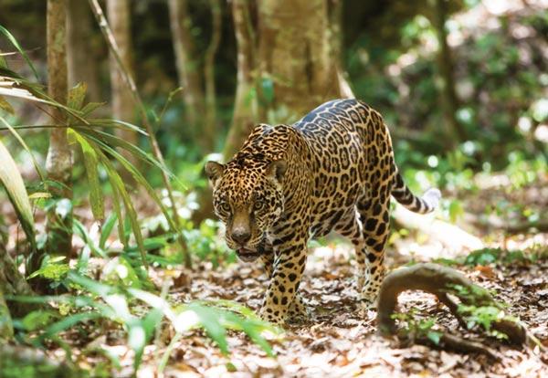 Мексика является четвертой страной в мире с точки зрения биоразнообразия