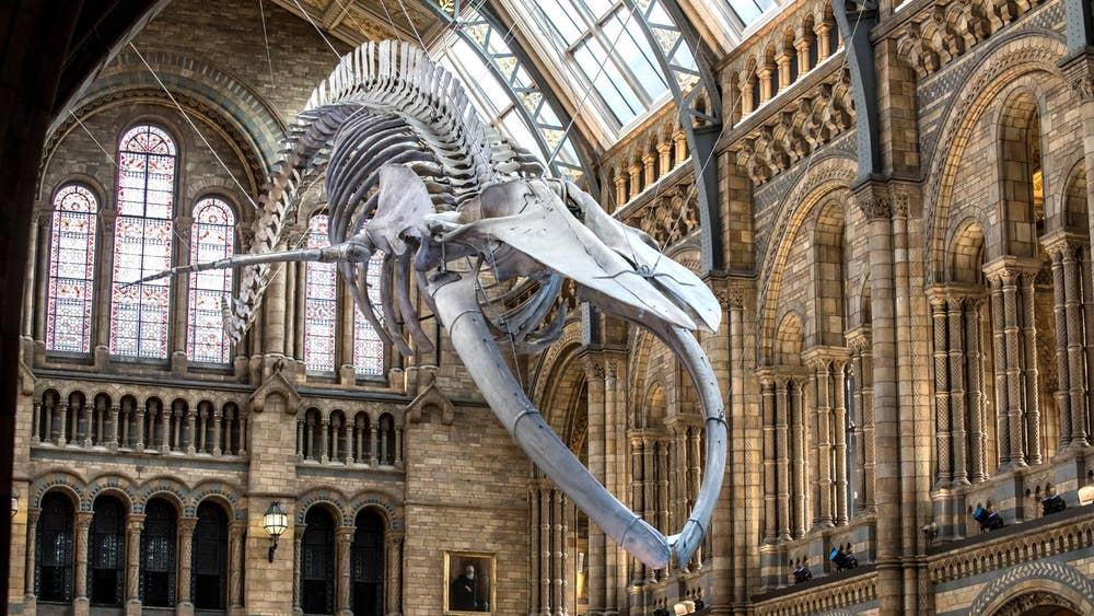 Музей естественной истории, Лондон