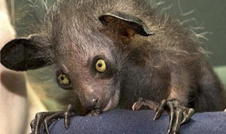 10 самых жутких животных и страны, где они обитают