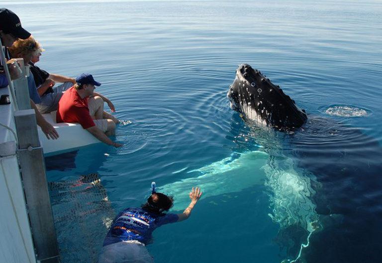 Лучшие места для наблюдения за китами, включая Исландию, Аляску и Канаду