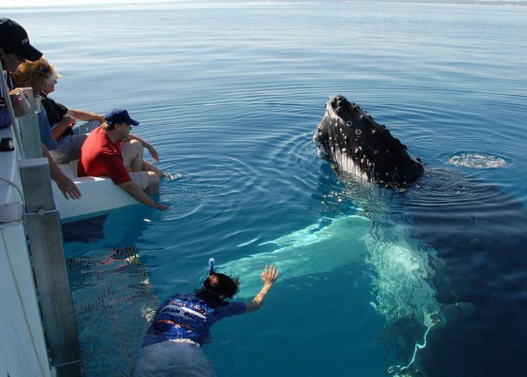 Лучшие места для наблюдения за китами, включая Исландию, Аляску и Канаду.