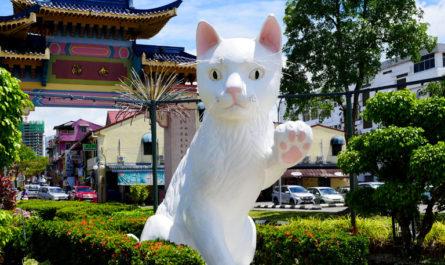 10 мест, которые все любители кошек захотят посетить