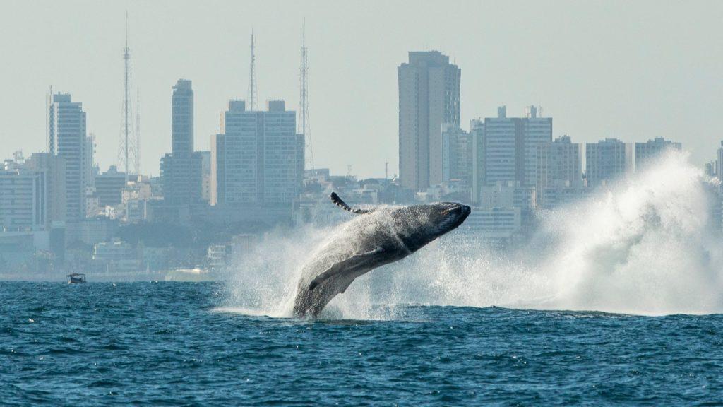 Бразилия киты