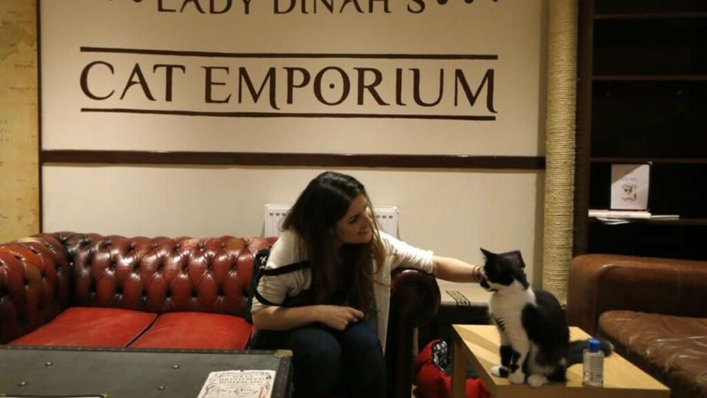 Lady Dinah's Cat Emporium, Лондон
