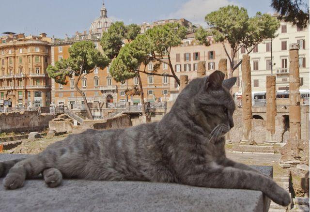 Площадь Торре-Арджентина, Рим