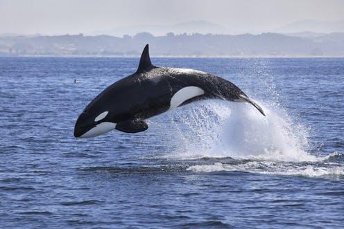 Канада киты