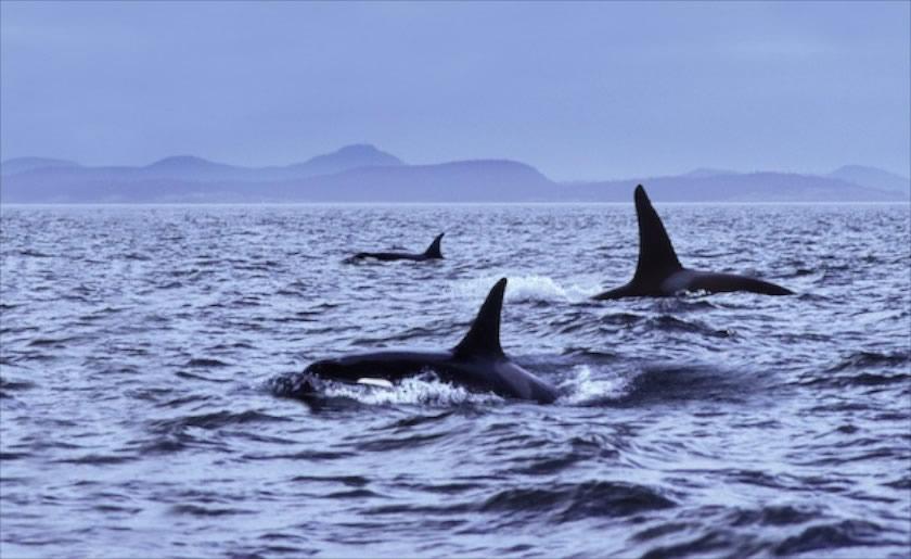 Шотландия киты