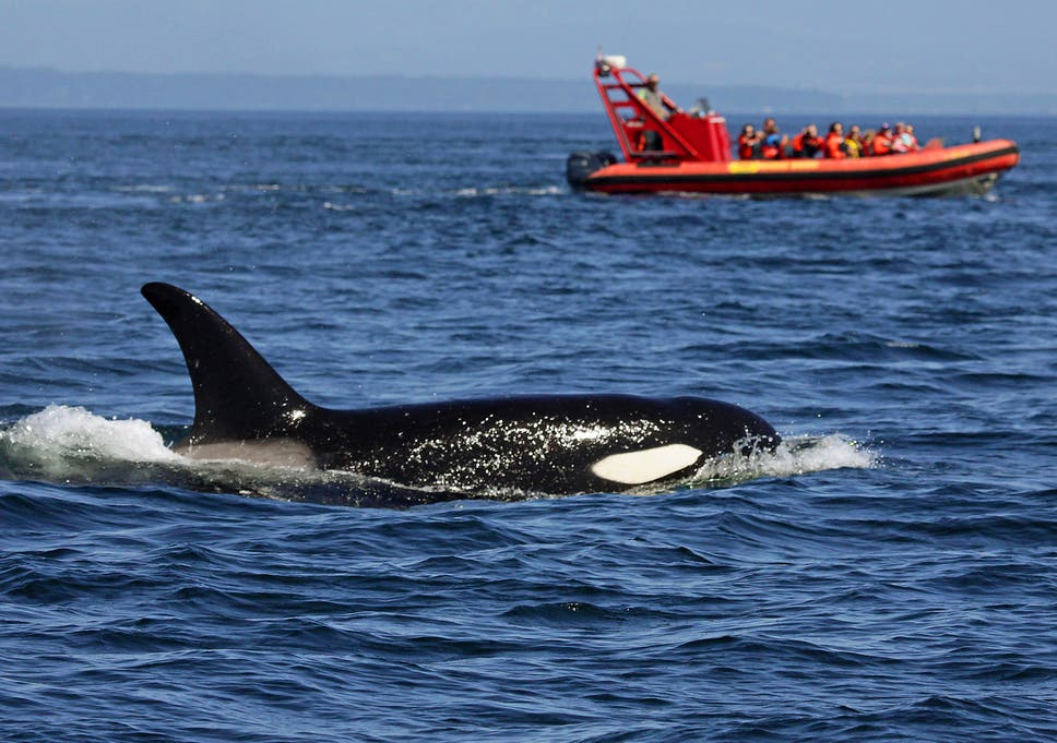 Аляска киты