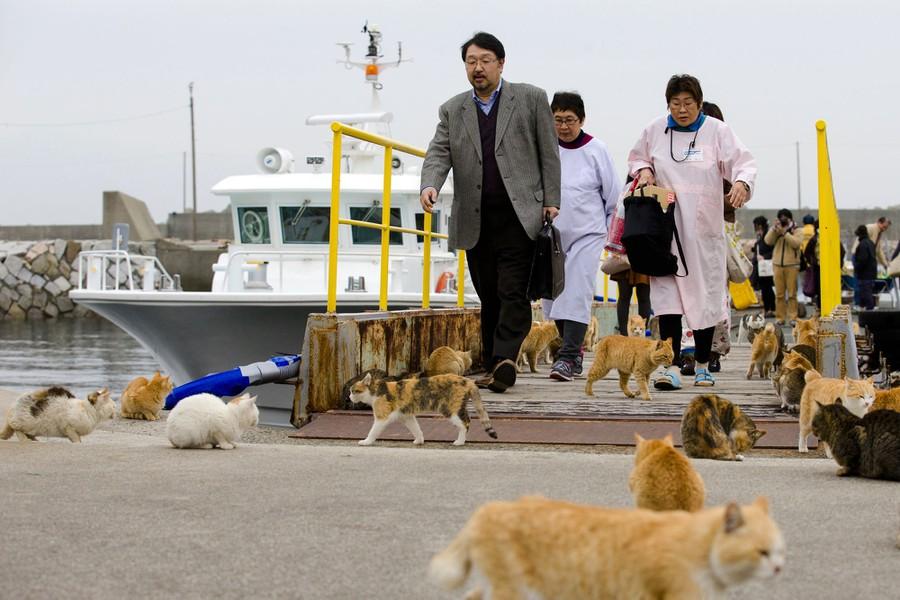 Остров Аосима, Япония