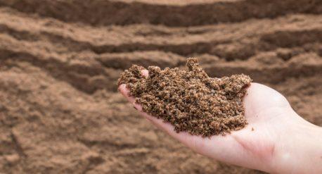 В одной чайной ложке почвы содержится миллиард микробов