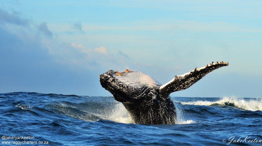 Южная Африка киты