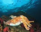 7 причин, по которым каракатицы могут быть умнее вас
